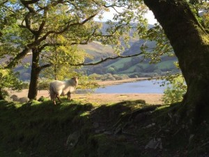 sheepR
